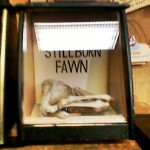 stillbornfawn